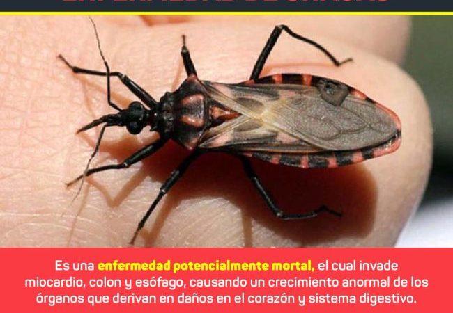 Llama Secretaría de Salud de Veracruz a prevenir enfermedad de Chagas